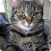 Adopt A Pet :: Gilly - Alexandria, VA