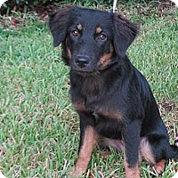 Adopt A Pet :: Ellie - Kingwood, TX