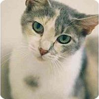 Adopt A Pet :: Pipsqueak - Davis, CA