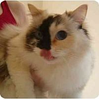 Adopt A Pet :: Cookie - Keizer, OR