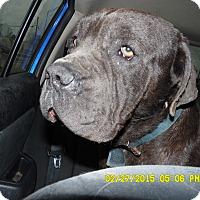 Adopt A Pet :: Duncan - Missouri City, TX