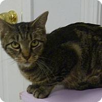 Adopt A Pet :: Hammy - Hamburg, NY