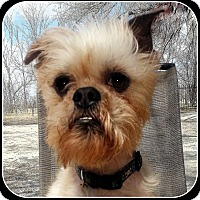 Adopt A Pet :: TEX - ADOPTION PENDING - Seymour, MO