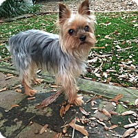 Adopt A Pet :: Ziggy - Leesburg, FL