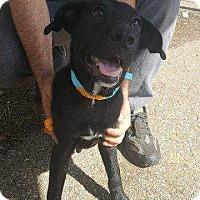 Adopt A Pet :: Ashton - Livingston Parish, LA