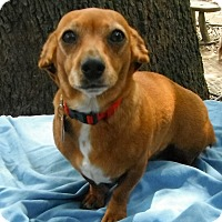 Adopt A Pet :: Chestnut - Wallis, TX