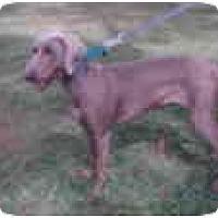Adopt A Pet :: Mya  **ADOPTED** - Eustis, FL