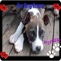 Adopt A Pet :: Piper - Cincinnati, OH