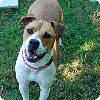 Adopt A Pet :: Lily - Farmington, ME