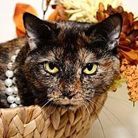 Domestic Shorthair Cat for adoption in Hazel Park, Michigan - Princess Luna