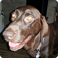 Adopt A Pet :: Piper - Coppell, TX