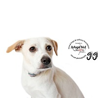 Terrier (Unknown Type, Medium) Mix Dog for adoption in Sherman Oaks, California - Gigi