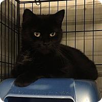 Adopt A Pet :: Lucy - Covington, VA