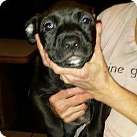 Adopt A Pet :: Curly - Boston, MA