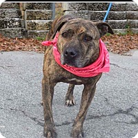 Adopt A Pet :: KoKo - Charlotte, NC