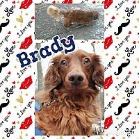 Adopt A Pet :: Brady - Cranston, RI