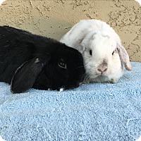 Adopt A Pet :: Wilson & Nelson - Bonita, CA