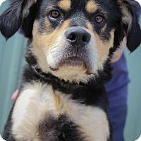 Adopt A Pet :: Kaiser - Martinsville, IN
