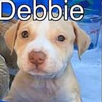 Adopt A Pet :: Debbie - PEORIA, AZ