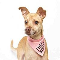 Adopt A Pet :: LOKI - Murray, UT