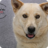 Adopt A Pet :: Mr. Fox - Cincinnati, OH