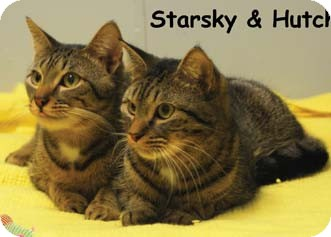 Domestic Shorthair Kitten for adoption in Merrifield, Virginia - Starsky & Hutch