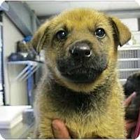 Adopt A Pet :: Owen - Alexandria, VA
