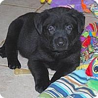 Adopt A Pet :: Axel - Minneola, FL