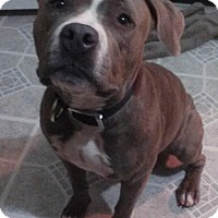 Adopt A Pet :: Khali - Hollywood, FL