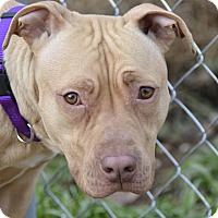 Adopt A Pet :: Heather - Meridian, ID