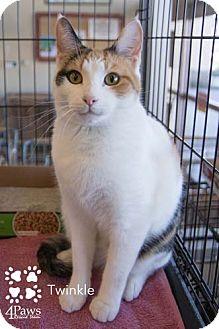 Calico Kitten for adoption in Merrifield, Virginia - Twinkle