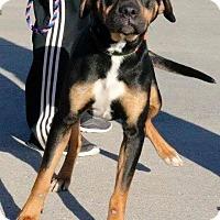 Adopt A Pet :: Buck - Sugar Grove, IL