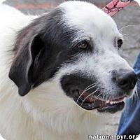 Adopt A Pet :: Bonnie - Beacon, NY