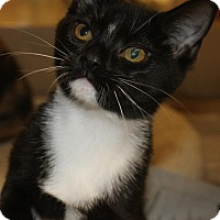 Adopt A Pet :: DANIKA - Clayton, NJ