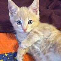 Adopt A Pet :: Jetson - Monrovia, CA