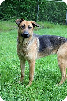 German Shepherd Dog Mix Dog for adoption in Tinton Falls, New Jersey - Lucy