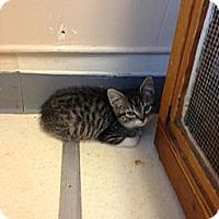 Adopt A Pet :: Smyth - Lancaster, MA