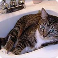 Adopt A Pet :: Belle - Alexandria, VA