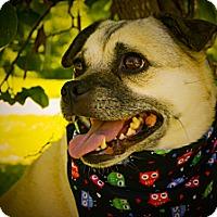 Adopt A Pet :: Maggie - Princeton, KY