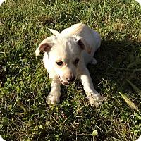 Adopt A Pet :: Frost - Saskatoon, SK