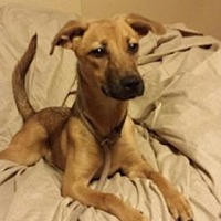 Adopt A Pet :: Emilly - Olympia, WA