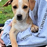 Adopt A Pet :: *Lucille - PENDING - Westport, CT