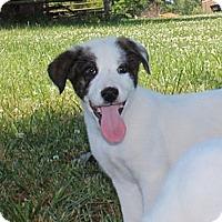 Adopt A Pet :: Nero - Foster, RI