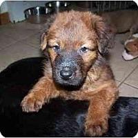 Adopt A Pet :: Mikey - Cuddebackville, NY