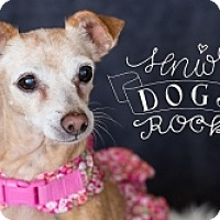 Adopt A Pet :: Cinnamon - Mesa, AZ