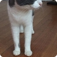 Adopt A Pet :: Rosie - Vancouver, BC