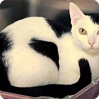 Adopt A Pet :: Zeta - Chattanooga, TN