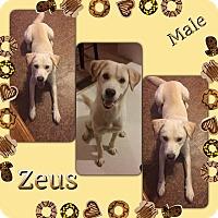 Adopt A Pet :: Zeus pending adoption - Manchester, CT