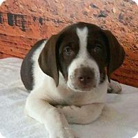 Adopt A Pet :: PATCH - Phoenix, AZ
