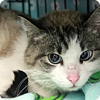 Adopt A Pet :: Trinity - New Richmond,, WI